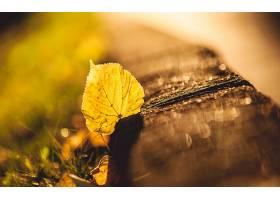 地球,秋天,叶子,特写镜头,巨,壁纸,图片