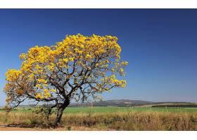 地球,树,树,自然,风景,壁纸,图片