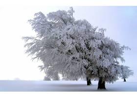 地球,树,树,雪,白色,草地,冬天的,严寒,风景优美的,壁纸,