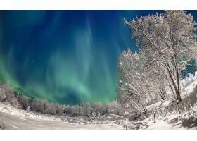 地球,曙光,北极星,冬天的,雪,树,森林,壁纸,图片
