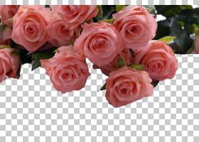 三月八日妇女节,花卉,插花,切花,floribunda,蔷薇,花卉设计,花瓣,