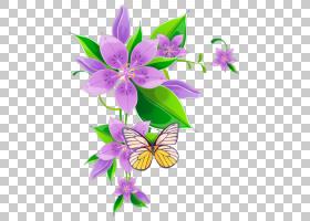 花卉剪贴画背景,花瓣,切花,紫罗兰家族,昆虫,传粉者,飞蛾与蝴蝶,