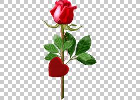 生日快乐蛋糕,芽,花卉,情人节,植物茎,切花,花卉设计,草本植物,静