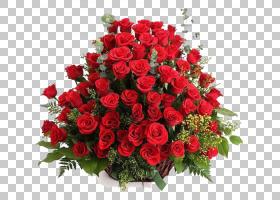 婚恋背景,floribunda,花瓣,一年生植物,粉红色家庭,花卉设计,玫瑰