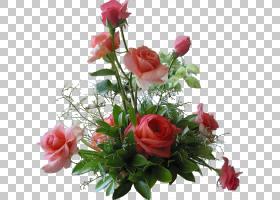 婚恋背景,一年生植物,花瓣,人造花,中心件,floribunda,蔷薇,切花,