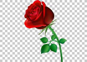 生日蛋糕画,花卉,植物茎,切花,花卉设计,植物群,插花,玫瑰秩序,玫