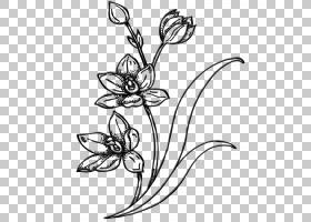黑白花,切花,视觉艺术,花瓣,花卉设计,分支,植物茎,树,线路,身体