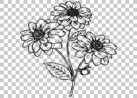 黑白花,花卉,着色簿,植物茎,对称性,传粉者,插花,视觉艺术,树,线