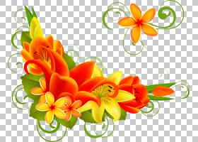 圣诞节和新年背景,花卉,花束,橙色,切花,插花,花卉设计,黄色,花瓣图片