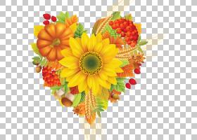 圣诞节和新年背景,非洲菊,花束,橙色,切花,花卉设计,雏菊家庭,水图片
