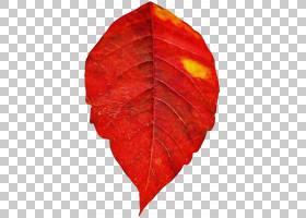 橙色,植物病理学,木本植物,落叶,花,橙色,植物,树,红色,叶,
