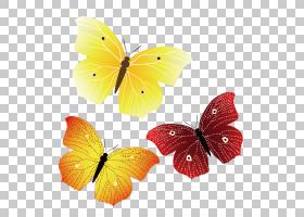橙花,刷脚蝴蝶,橙色,飞蛾与蝴蝶,昆虫,黄色,传粉者,花瓣,花,动物,图片