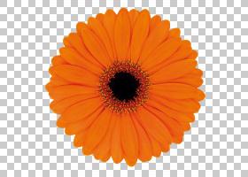 生日快乐背景,多年生植物,星形目,向日葵,切花,雏菊家庭,特写镜头图片