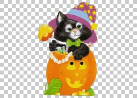 万圣节南瓜卡通,爪子,花,橙色,小猫,猫,博客,交换机,胡须,南瓜,动