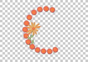 橙花,圆,食物,线路,花瓣,水果,花,橙色,黄河地图,业务,太极,道德图片