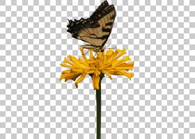 花卉剪贴画背景,飞蛾与蝴蝶,植物茎,切花,刷脚蝴蝶,植物群,昆虫,图片