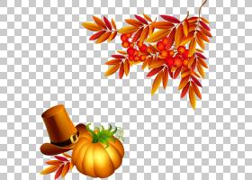 花卉剪贴画背景,食物,冬季壁球,花瓣,卡拉巴扎,天然食品,南瓜,切