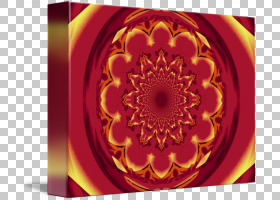 圆形背景,洋红色,花瓣,花,橙色,黄色,圆,对称性,图片