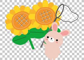 夏花背景,食物,花,橙色,黄色,七夕节,运气,基戈,月,七月,丽秋,问