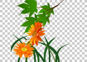 家谱设计,花卉,树,花盆,植物群,大丽花,插花,橙色,植物茎,分支,非