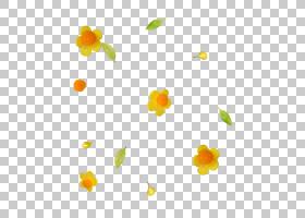 橙花,橙色,植物群,黄色,花,博客,花瓣,