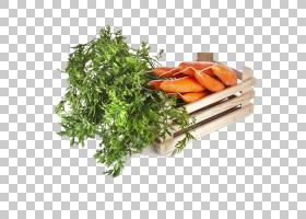 洋葱动画,叶菜,草药,素食,Eintopf,洋葱,肉汤,南瓜,韭菜,黄瓜,土
