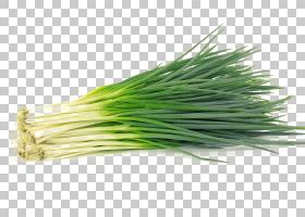 洋葱动画,叶菜,韭菜,草,威尔士洋葱,商品,配料,草族,葱属,洋葱,水