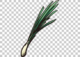 洋葱动画,植物,草,线路,大蒜,棒状图形,Auglis,绘图,[医]瘘管葱属