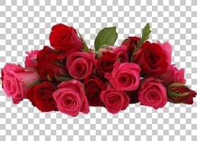 新年快乐礼物,红色,洋红色,插花,蔷薇,花瓣,玫瑰秩序,玫瑰家族,花