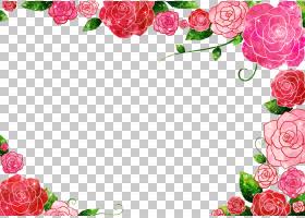 背景家庭日,情人节,花卉,花束,插花,花瓣,切花,植物群,贺卡,花卉图片