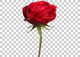 背景家庭日,红色,花卉,植物茎,洋红色,蔷薇,插花,花卉设计,玫瑰秩图片