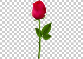 油画花,红色,花卉,洋红色,植物茎,花瓣,花卉设计,切花,蔷薇,花盆,