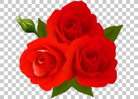 花卉剪贴画背景,红色,插花,蔷薇,玫瑰秩序,玫瑰家族,桃子,中国玫