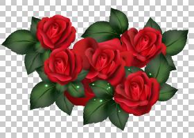 背景家庭日,红色,花卉,情人节,插花,切花,floribunda,花卉设计,玫