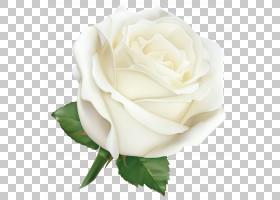 花卉剪贴画背景,花卉,花束,蔷薇,切花,floribunda,玫瑰秩序,玫瑰