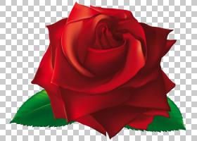 花卉剪贴画背景,花瓣,种子植物,切花,玫瑰秩序,玫瑰家族,植物,开