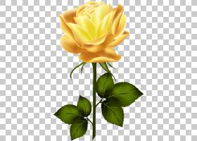 花卉剪贴画背景,芽,花卉,黄色,玫瑰秩序,玫瑰家族,植物,玫瑰,花瓣