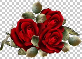 花卉剪贴画背景,蔷薇,花卉,插花,植物,玫瑰秩序,玫瑰家族,红色,玫