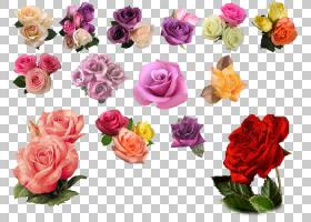花束画,草本植物,花卉,花束,粉红色家庭,洋红色,插花,切花,florib图片