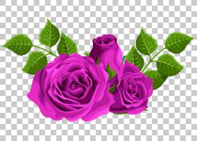 黑粉红玫瑰,花卉,花束,洋红色,蔷薇,紫罗兰,切花,花卉设计,花瓣,图片