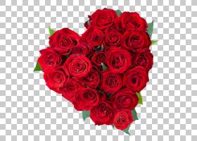 背景家庭日,红色,插花,floribunda,玫瑰秩序,玫瑰家族,花园玫瑰,