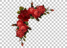 粉红色花卉背景,花卉,花束,插花,人造花,蔷薇,玫瑰秩序,玫瑰家族,