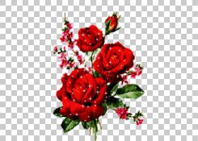 情人节背景,红色,花卉,插花,切花,植物群,人造花,花卉设计,情人节图片