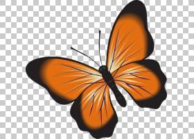 粉红色花卡通,机翼,粉虱科,传粉者,花,橙色,刷脚蝴蝶,昆虫,飞蛾与图片