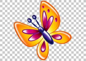 橙花,线路,刷脚蝴蝶,橙色,飞蛾与蝴蝶,昆虫,黄色,帝王蝴蝶,传粉者图片