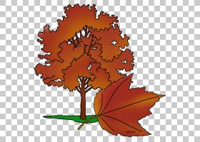 树干绘图,花,橙色,植物,叶,美利坚合众国,枫树,美国州,干线,秋季