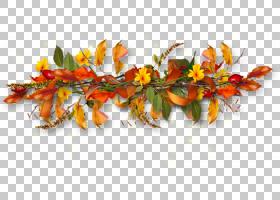 网页设计,花瓣,分支,花,橙色,主页,博客,电邮,网页设计,
