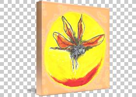 橙花,花,传粉者,橙色,蝴蝶,飞蛾与蝴蝶,黄色,昆虫,图片