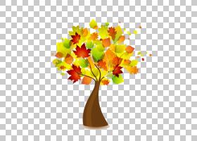 橙色,秋季,分支,木本植物,花盆,花,橙色,植物,树,叶,