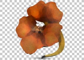 橙色,植物,花,橙色,花瓣,